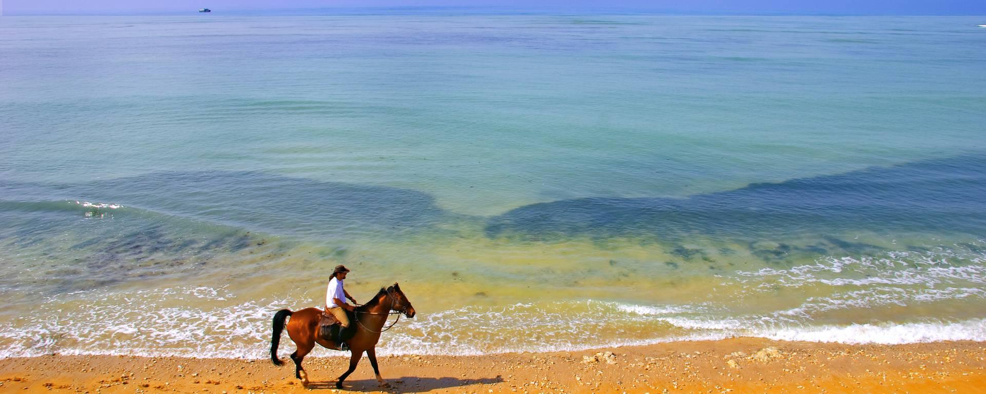 Balade à cheval sur la plage par François Blanchard