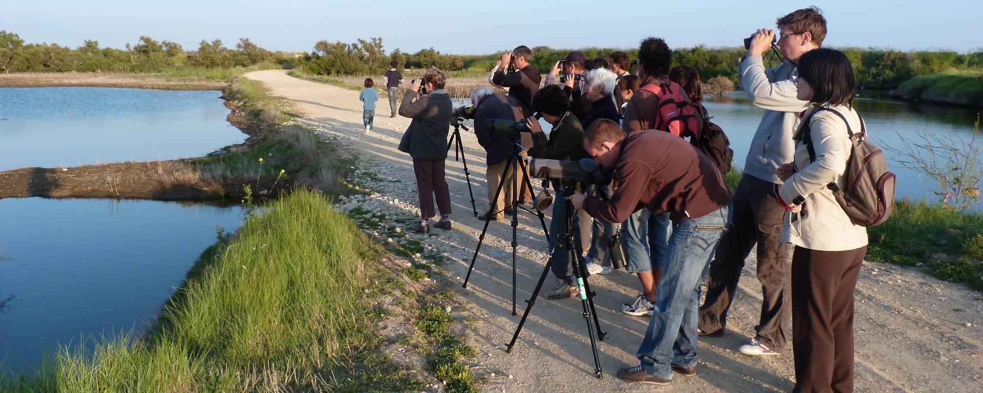 Groupe observant les oiseaux ©SPL Destination Ile de Ré