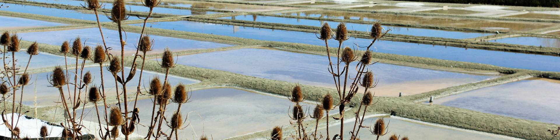 Marais Salants ©Lesley Williamson