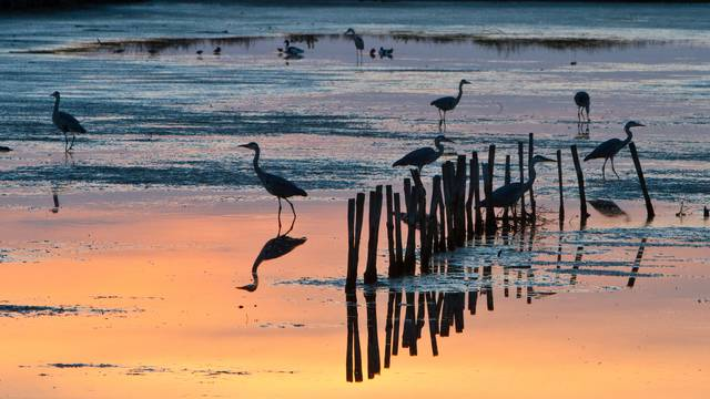 Oiseaux sur la plage par François Blanchard