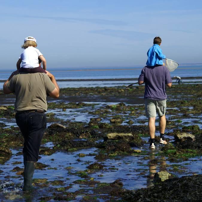 La pêche à pied, à Loix, île de Ré