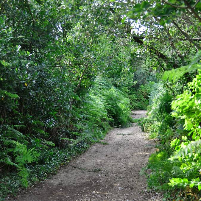 Balade guidée dans les Bois photo de Bernard Collin